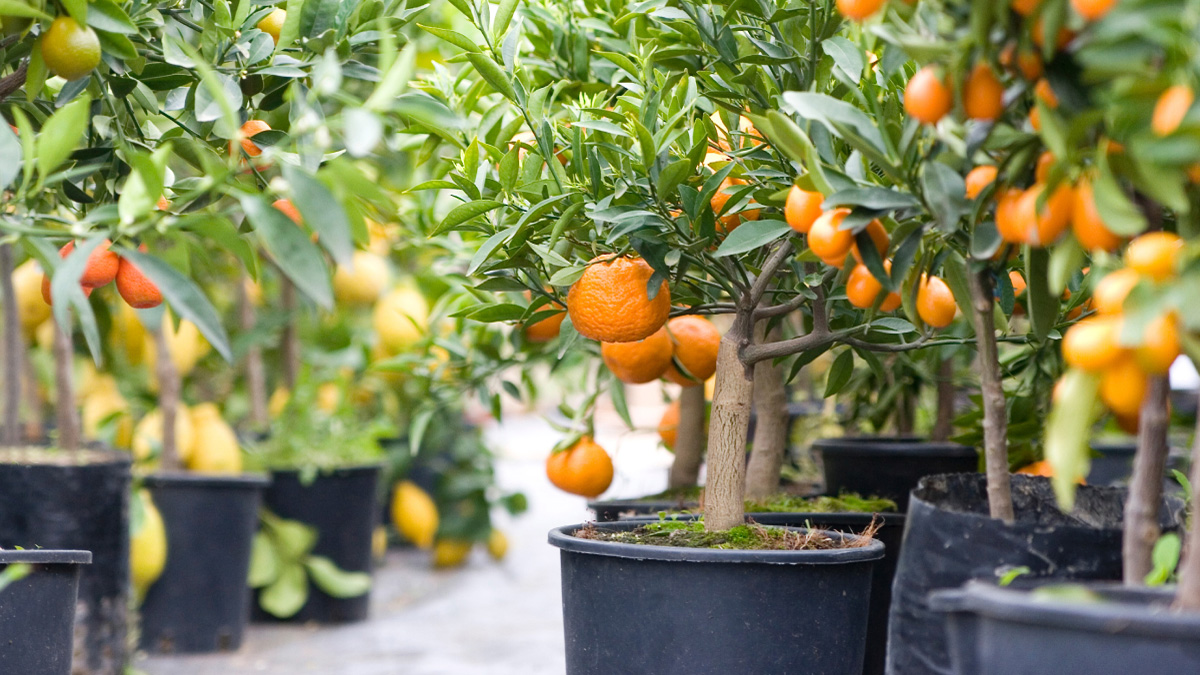 Planting Fruits | USHEALTH Group Gardening