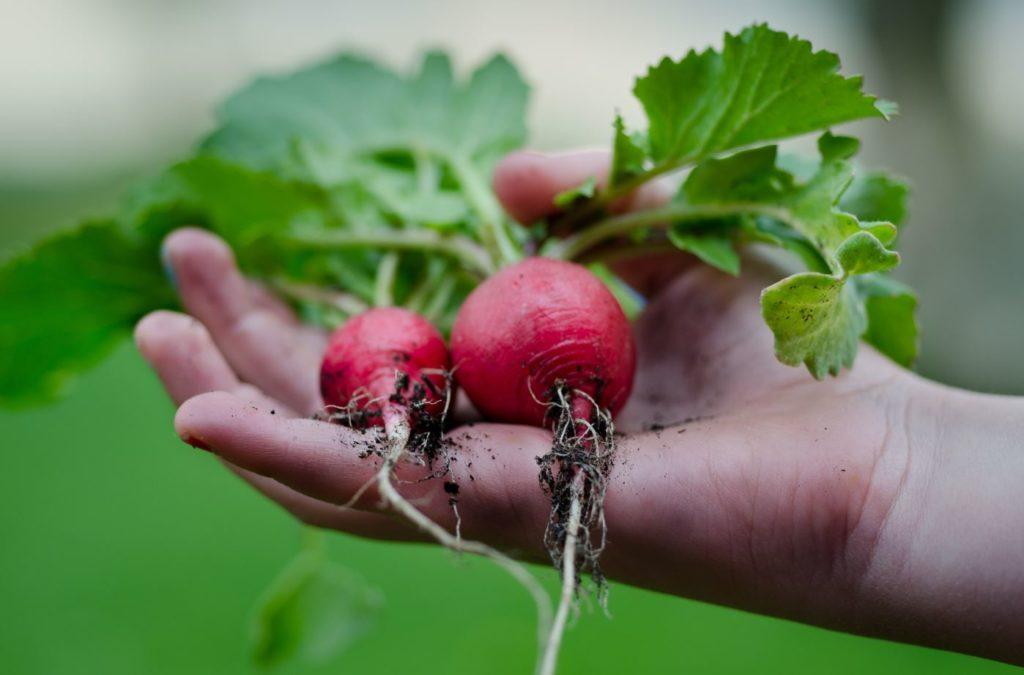 USHEALTH Group Gardening Series Vegetables
